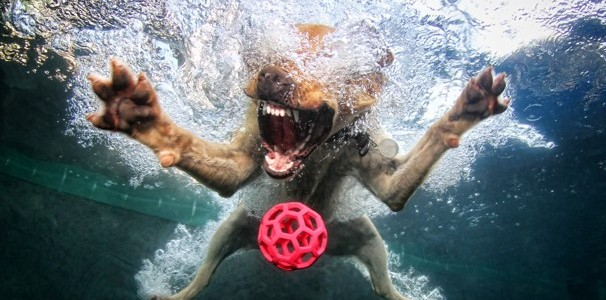 Dog diving underwater