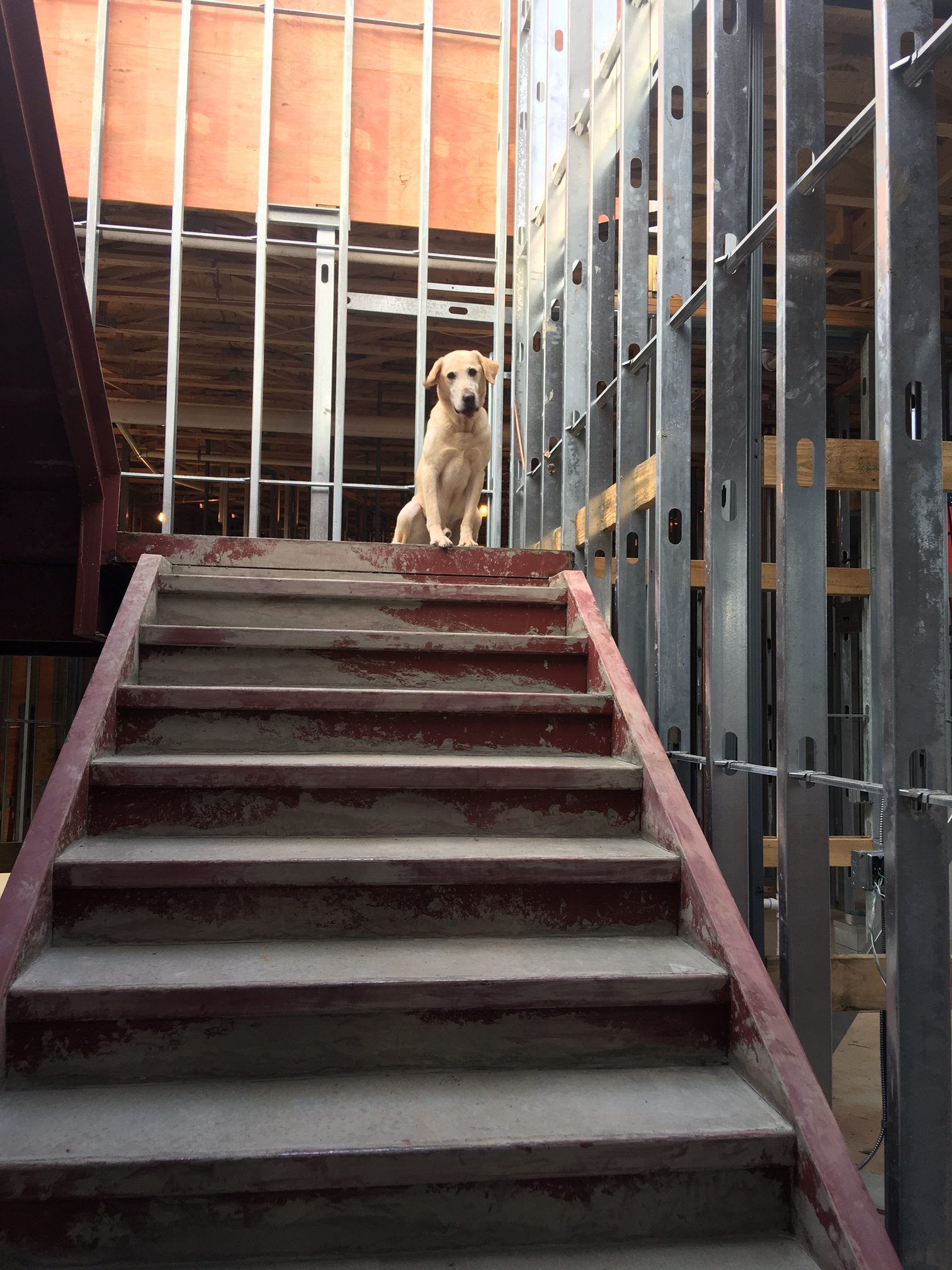 Dog inside under construction Building
