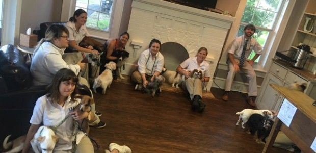 UVH Staff with dogs