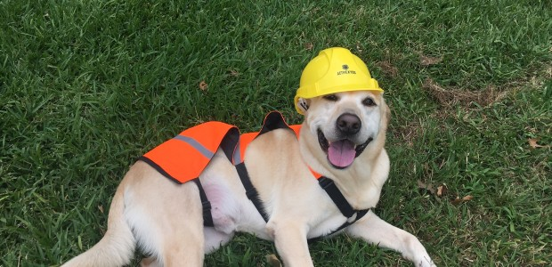 Dog with construction hat