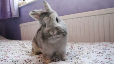 rabbit on bed