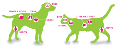 Dog and cats body parts illustration