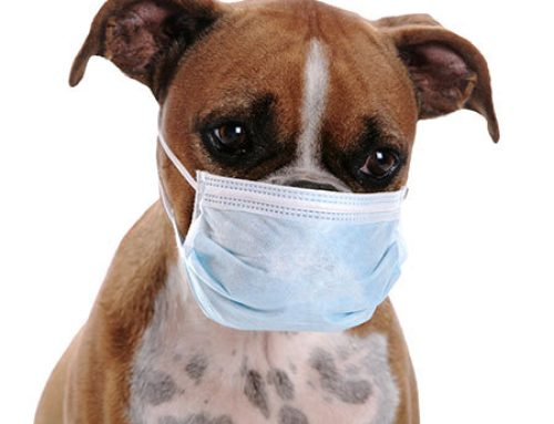 So your Dog is Coughing!!!