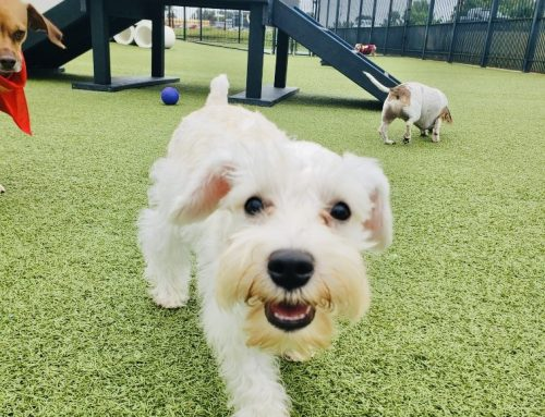 No More Boring Walks! Enrichment Activities for Dogs